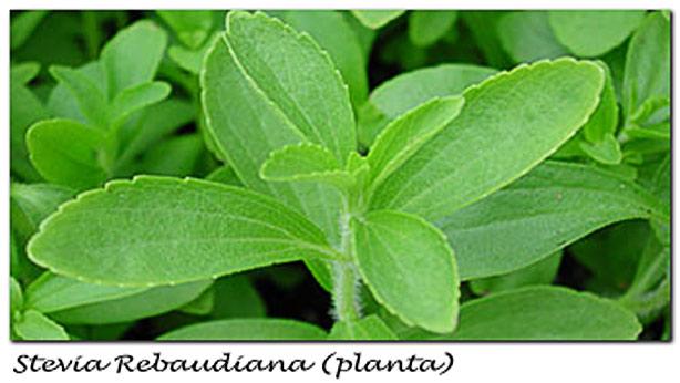 Stevia y dieta Dukan
